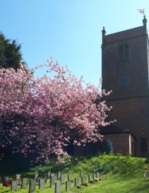 Cherry Tree Spring 2020