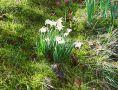 Spring in Churchyard Feb. 2021a